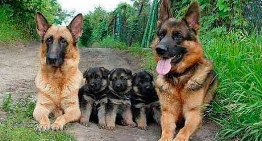 Fotos de Familias De Perros Muy Tiernas Y Divertidas