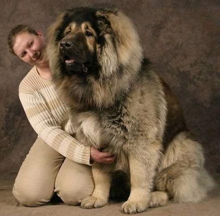 Fotos de Razas de Perros Grandes