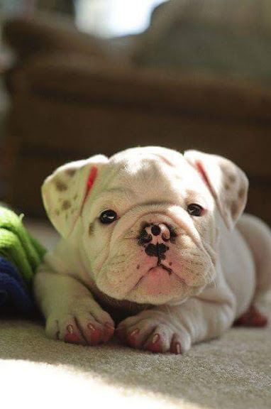 Fotos de cachorros preciosos