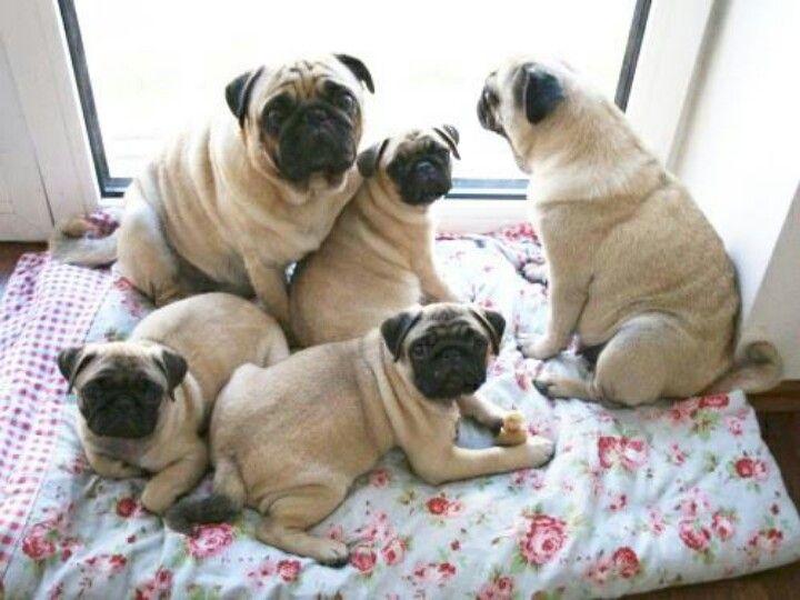 Fotos de familias de perros