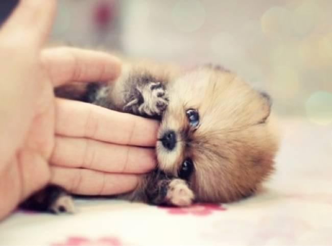 Fotos de mini perritos adorables
