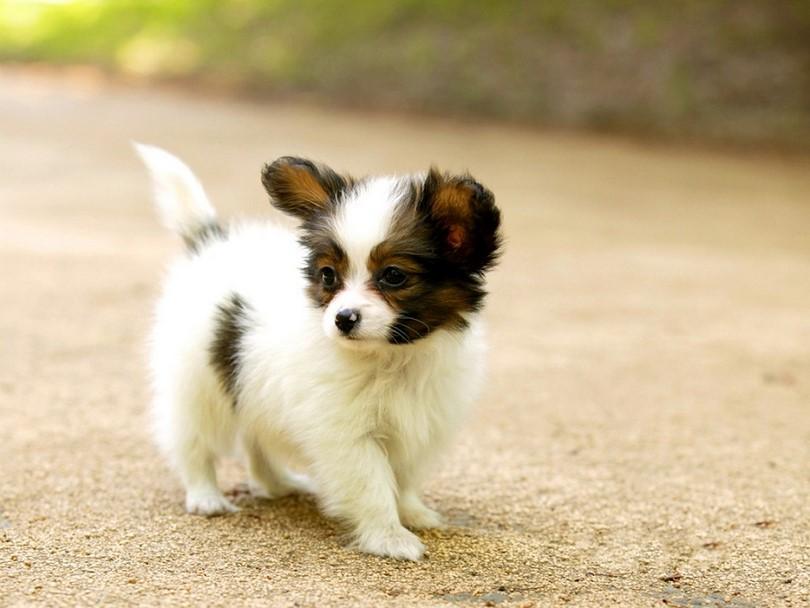 Fotos de perritos mas pequeños