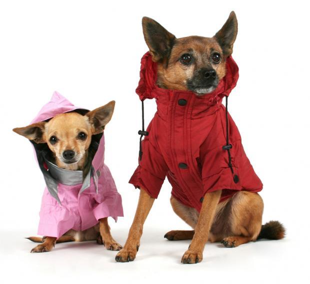 Fotos de perros Vestidos a la moda