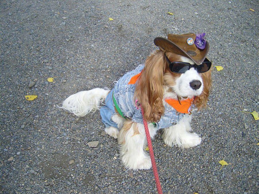 Fotos de perros con estilo