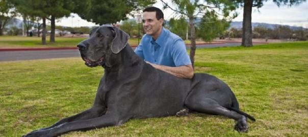 Fotos de perros super grandes