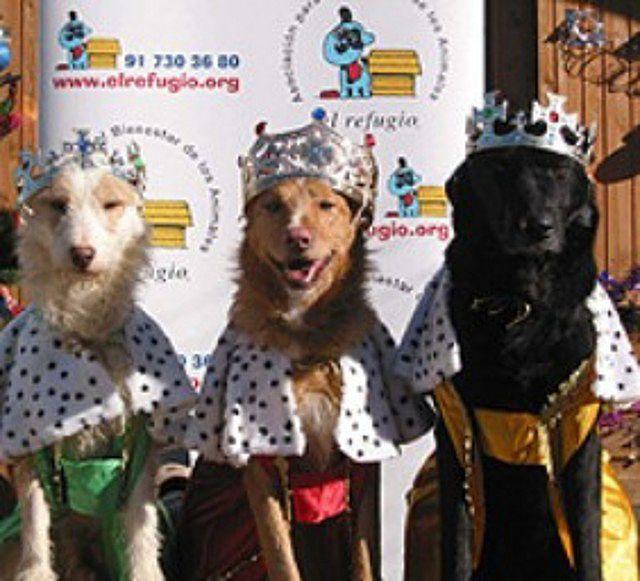 Fotos de perros vestidos de reyes magos