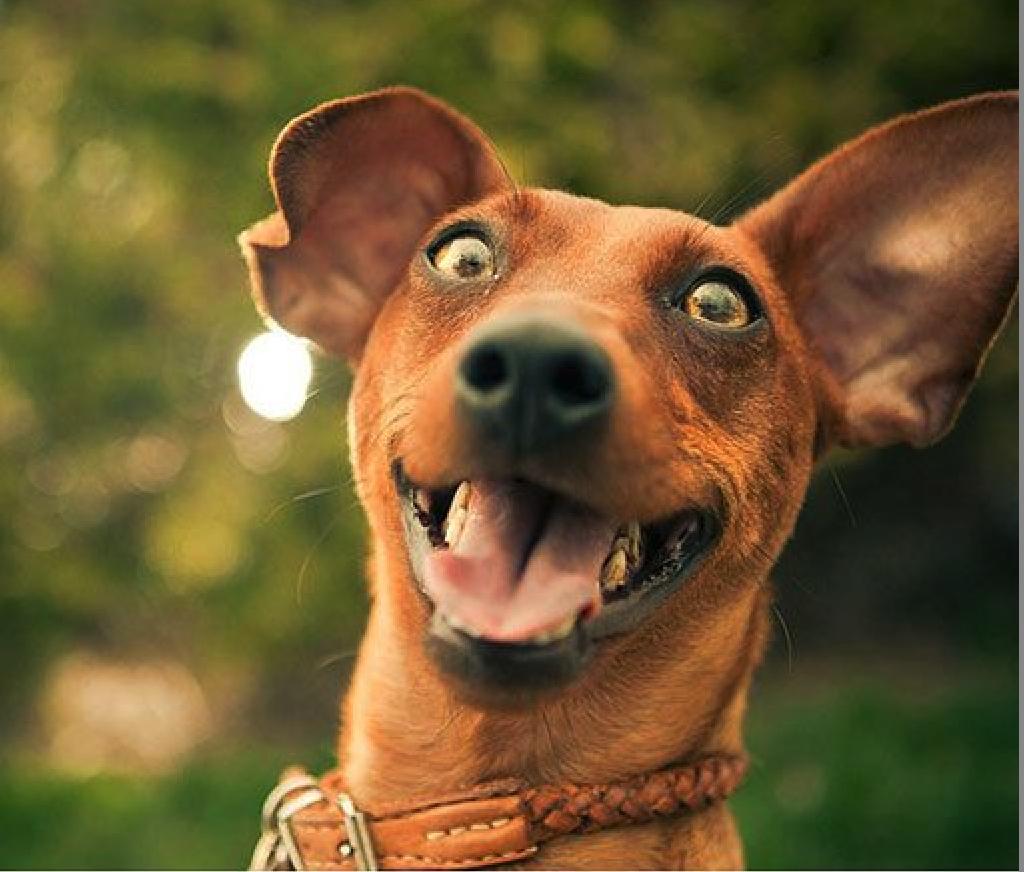Fotos graciosas de selfies de perros