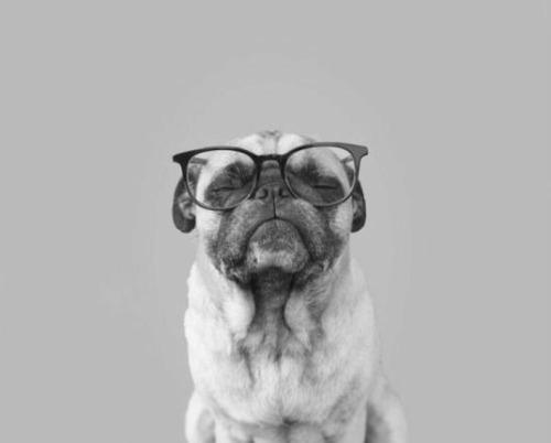 Graciosa y tierna imagen a balnco y negro de un perro usando gafas