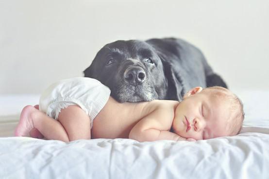 Hermosa imagen de un bebe y su perro durmiendo