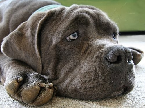 Imagen de perrito con carita muy triste y conmovedora
