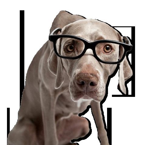 Imagen de perro grande con gafas