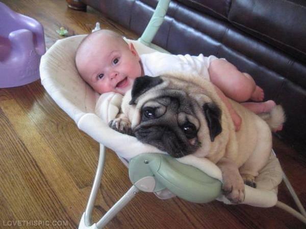 Imagen de perros con bebes