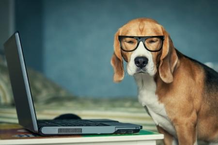 Imagen de un perro con el computador usando gafas