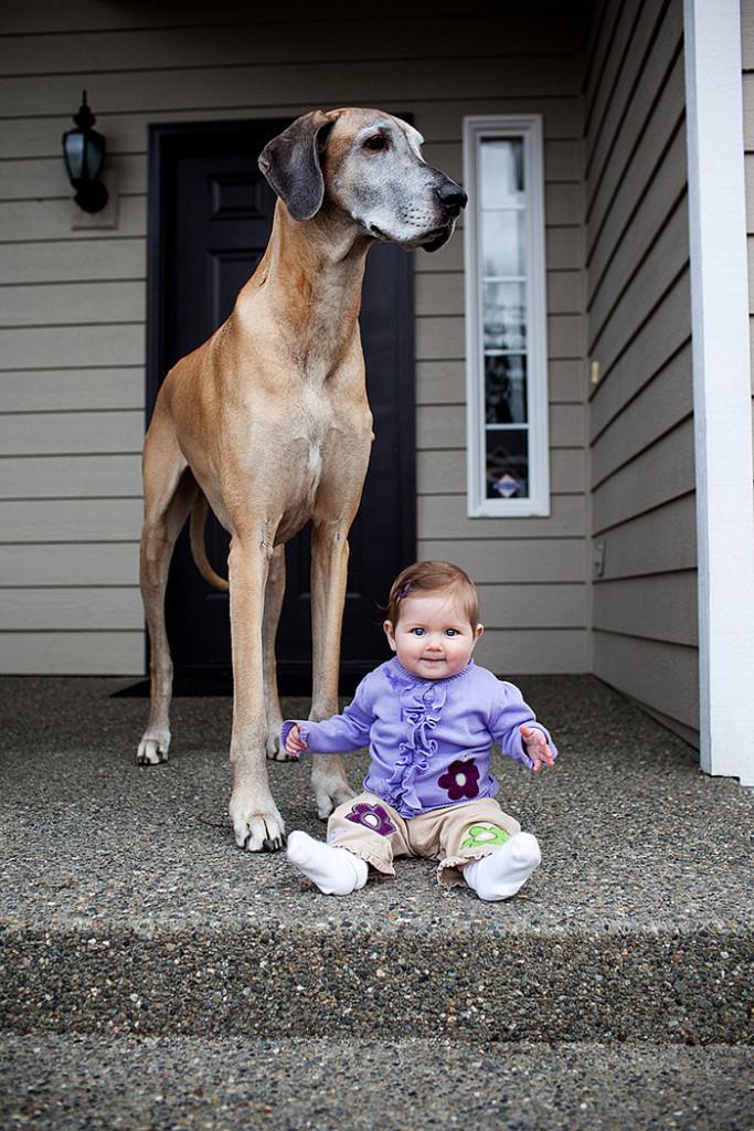 Imagen de un perro gigante con un bebe