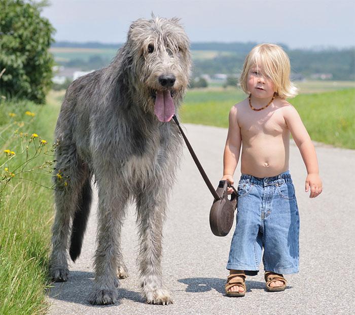 Imagen de un perro grande junto a un niño