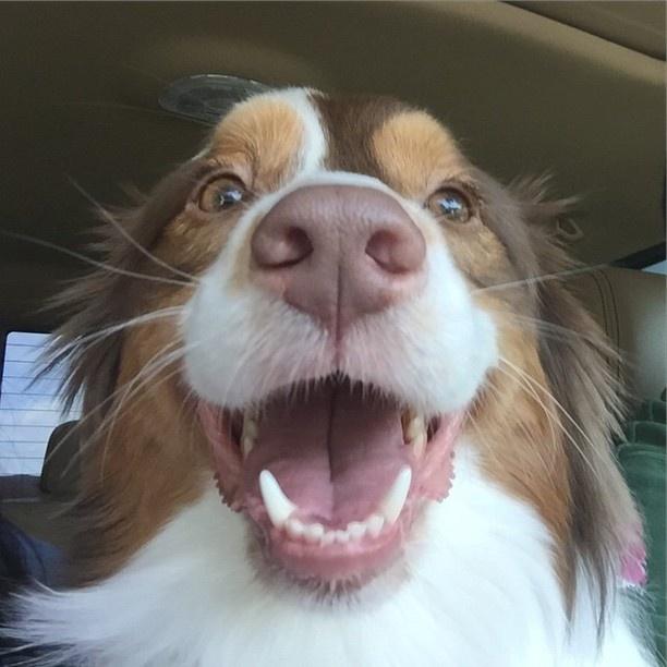 Imagen de un perros feliz tomandose una selfie