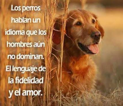 Imagenes Bonitas Con Mensajes Sobre La Fidelidad Y El Amor De Los Perros