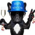 Imagenes De Año Nuevo Con Perritos