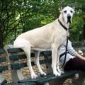 10 Imagenes De Los Mas Sorprendentes Perros Gigantes
