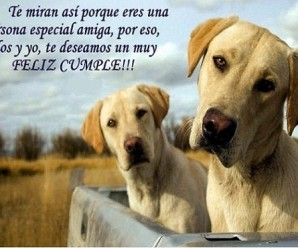 Imagenes De Perros Con Frases Para Felicitar En El Cumple