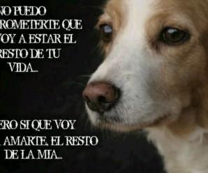Imagenes De Perros Con Frases Te Amare Hasta El Final