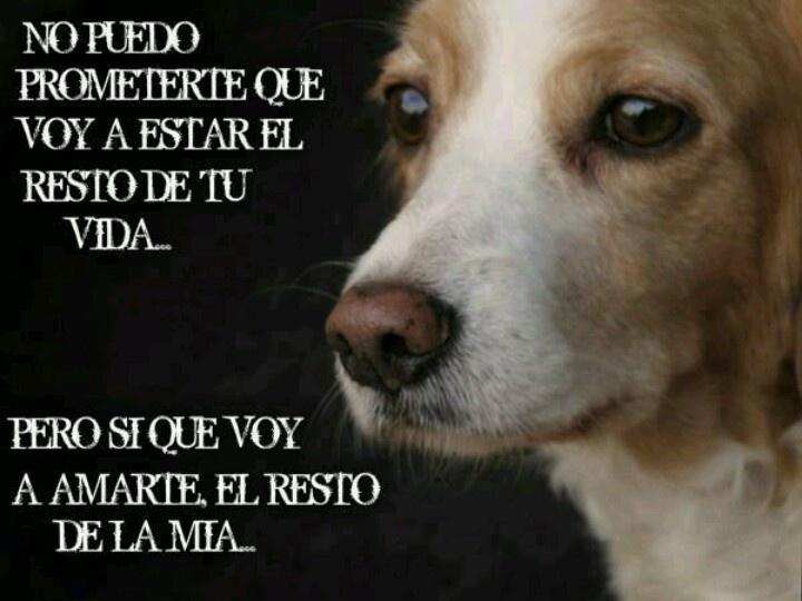 Imagenes De Perros Te Amare Hasta El Final