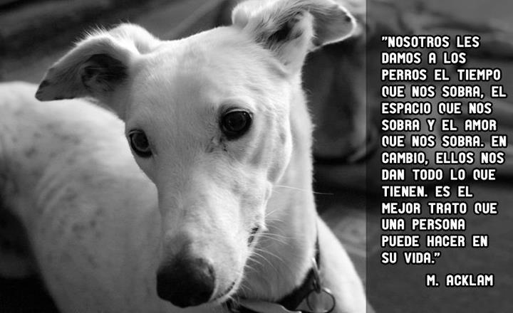 Imagenes Lindas De Perros Con Reflexiones Para Celular Sobre El Amor De Los Perros y Darles Nuestro Amor