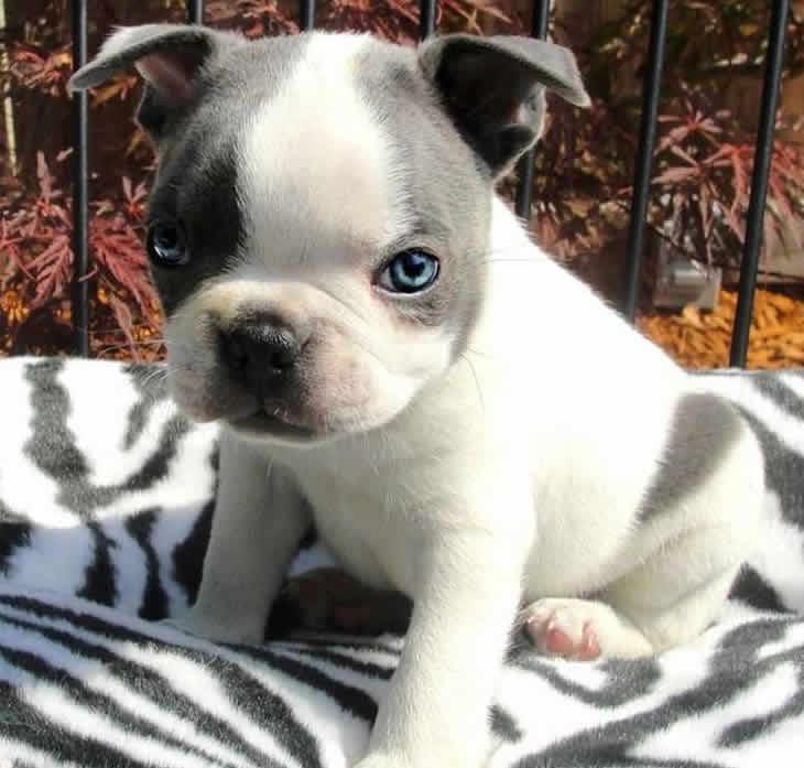Imagenes Preciosas de Cachorritos Super Tiernos y Hermosos para Descargar