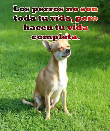 Imagenes con frases bonitas sobre los perros