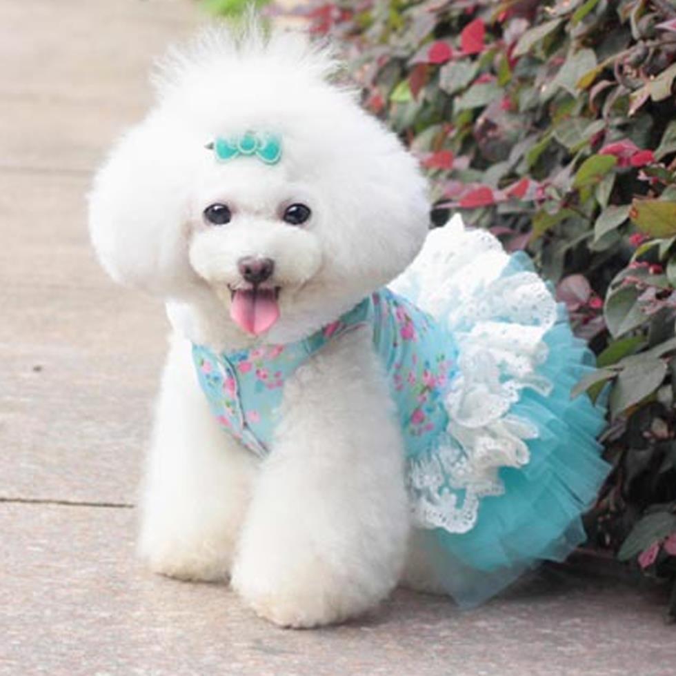 Imagenes de Perros Vestidos Muy Chidas Para El Facebook