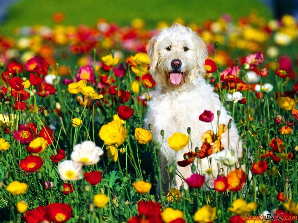 Imagenes de Perros en Medio De Un Campo De Flores Para Fondo De Pantalla