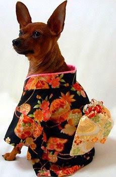 Imagenes de Perros fashion