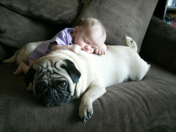Imagenes de bebes durmiendo con su perrito