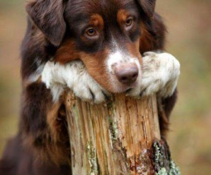 Las 5 Imagenes de Perritos Con Cara Mas Triste y Conmovedora