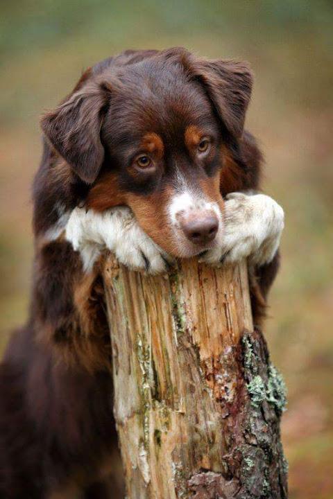 Imagenes de perritos con cara mas triste y conmovedora