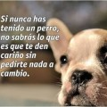 Imagenes Con Mensajes Sobre Los Perros