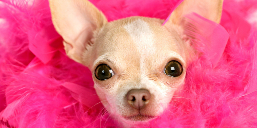 Imagenes de perritos super tiernos