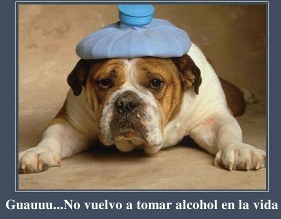 Imagenes de perros Con frases graciosas