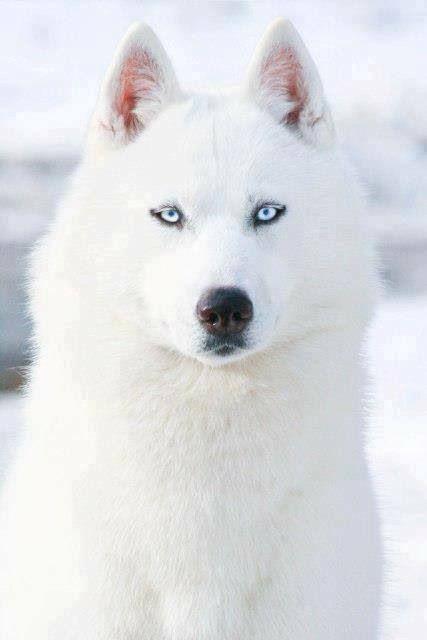 Imagenes de perros blancos bonitos