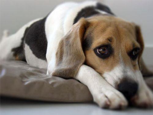 Imagenes de perros tristes