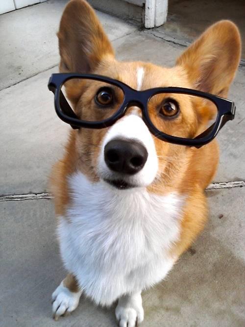 Imagenes de tiernos perros con gafas
