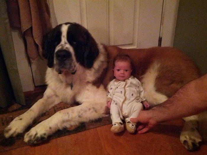 Imagenes de un bebe junto a perro grande