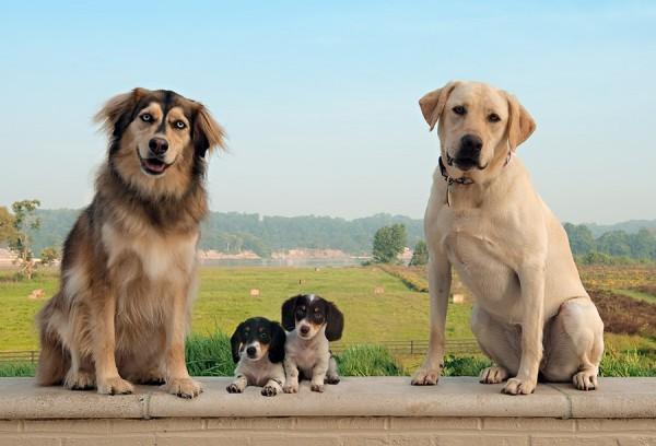 Imagenes de una familia de perros