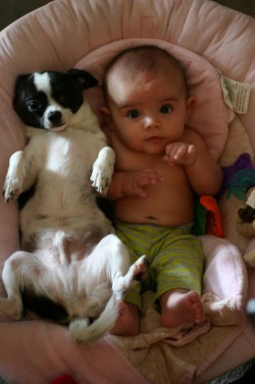 Imagenes divertidas y tiernas de perros con bebes