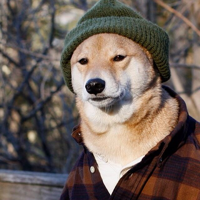 Imagenes graciosas de perros vestidos