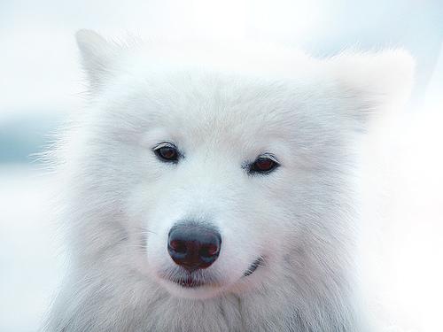 Perro blanco hermoso