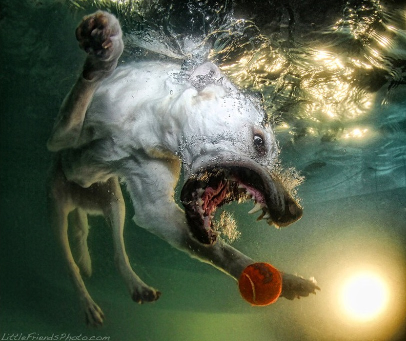 Perro cogiendo una pelota dentro del agua