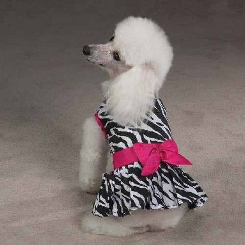Perro pequeño vestido fotos