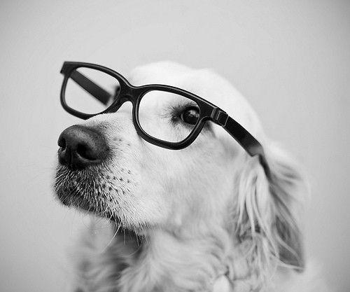 Perros con gafas a blanco y negro