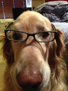 Perros graciosos usando gafas